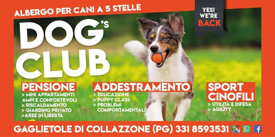 Pensione per cani e centro cinofilo. Dog's Club Umbria.