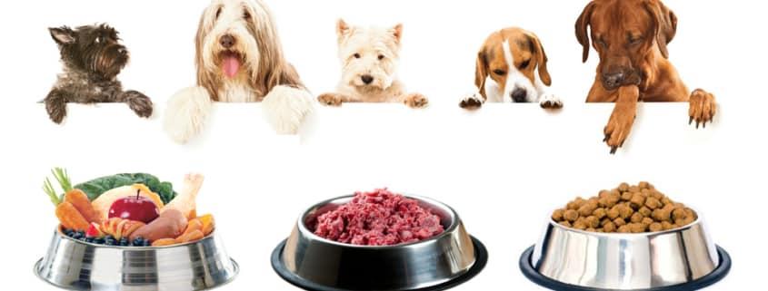 Cibo secco o cibo umido per il cane
