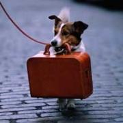Hotel per cani
