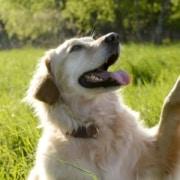 Addestramento cani Dog's Club Umbria
